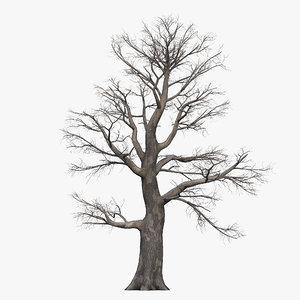 3D dead oak tree model