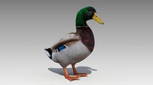 3D mallard duck