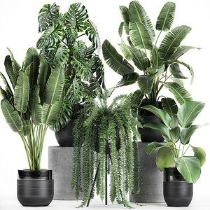 plants interior black houseplants 3D model