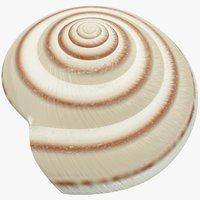 Seashell V10