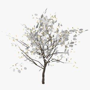 3D cherry laurel winter model