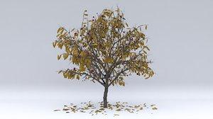 3D cherry laurel autumn