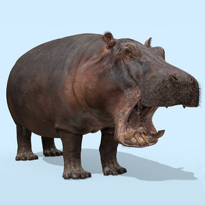 hippo 8k animation hippopotamus model