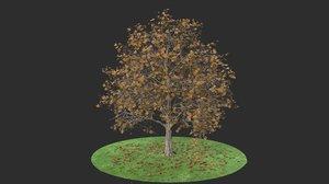 3D platanus autumn hight