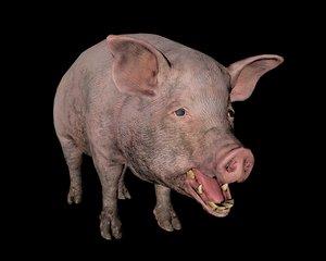 pig animal 3D model