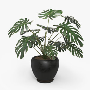 monstera deliciosa pot 3D model