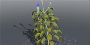 plants flower 3D model