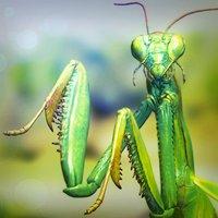 Mantis Religiosa rigged