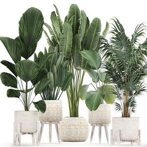 3D plants interior rattan houseplants