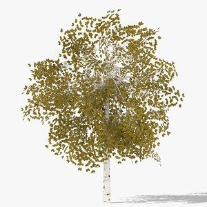 betula autumn 3D model