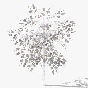 3D betula winter model