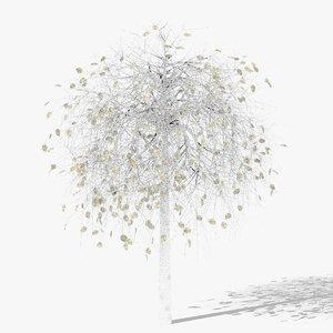 3D betula winter hight