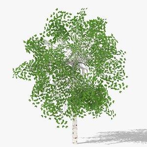 3D betula summer