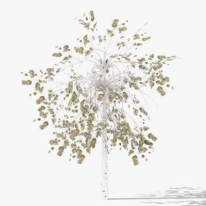 betula winter 3D model