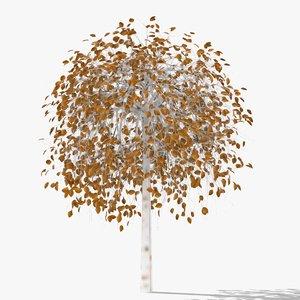 betula autumn hight 3D