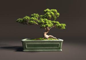 pot trunk leaves 3D