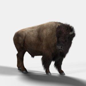 bison male 3D model