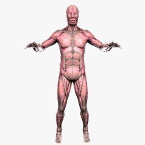 3D anatomy male muscular model