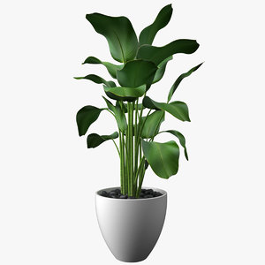 plant big leaves 3D