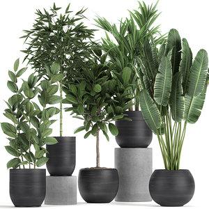 plants interior black houseplants 3D