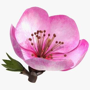 3D model sakura pink flower