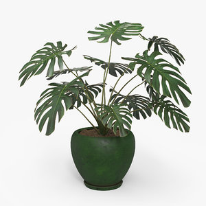 3D monstera deliciosa pot