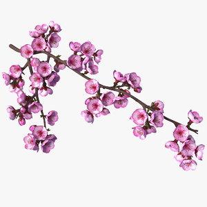 3D sakura tree branch pink model
