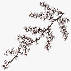 white cherry blossom branch 3D