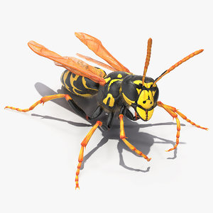 3D wasp fur rigged model