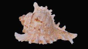 3D colored murex sea model