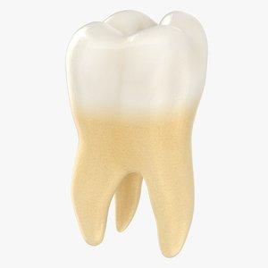 3D realistic molar