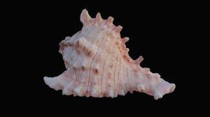 3D murex sea shell