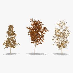 3D betula autumn hight