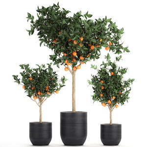 3D decorative tree orange interior