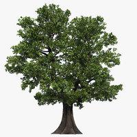 Oak Tree 04