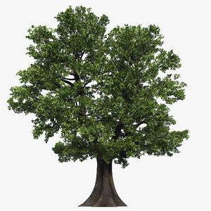 oak tree 04 3D model
