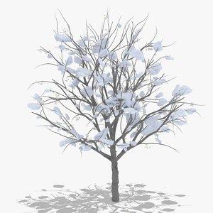 hawthorn winter hight 3D
