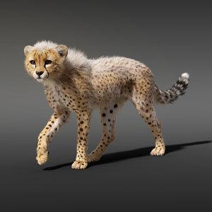 cheetah fur animation model