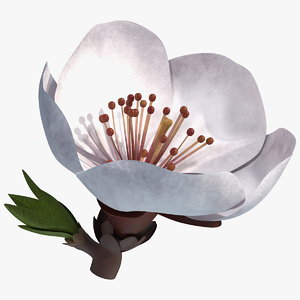 cherry white flower model