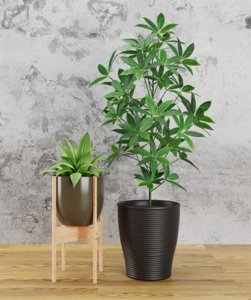 3D house plant model