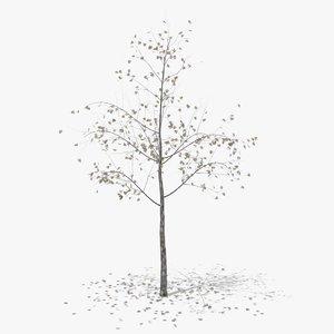 3D hawthorn autumn hight model