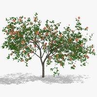 diospyros fruits hight poly