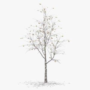pear winter hight 3D model