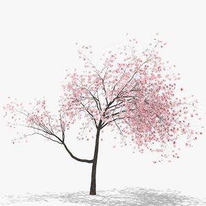 3D plum flowers hight model