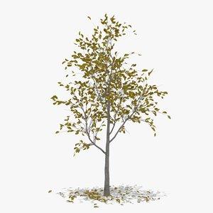 3D pear autumn hight model