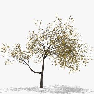 3D model plum autumn hight
