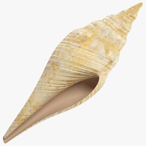 seashell real 3D model