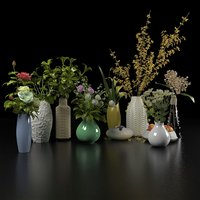 collection of ornamental plants in pots