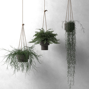hang plant home model