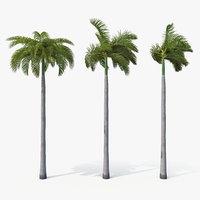Palms Royal 02